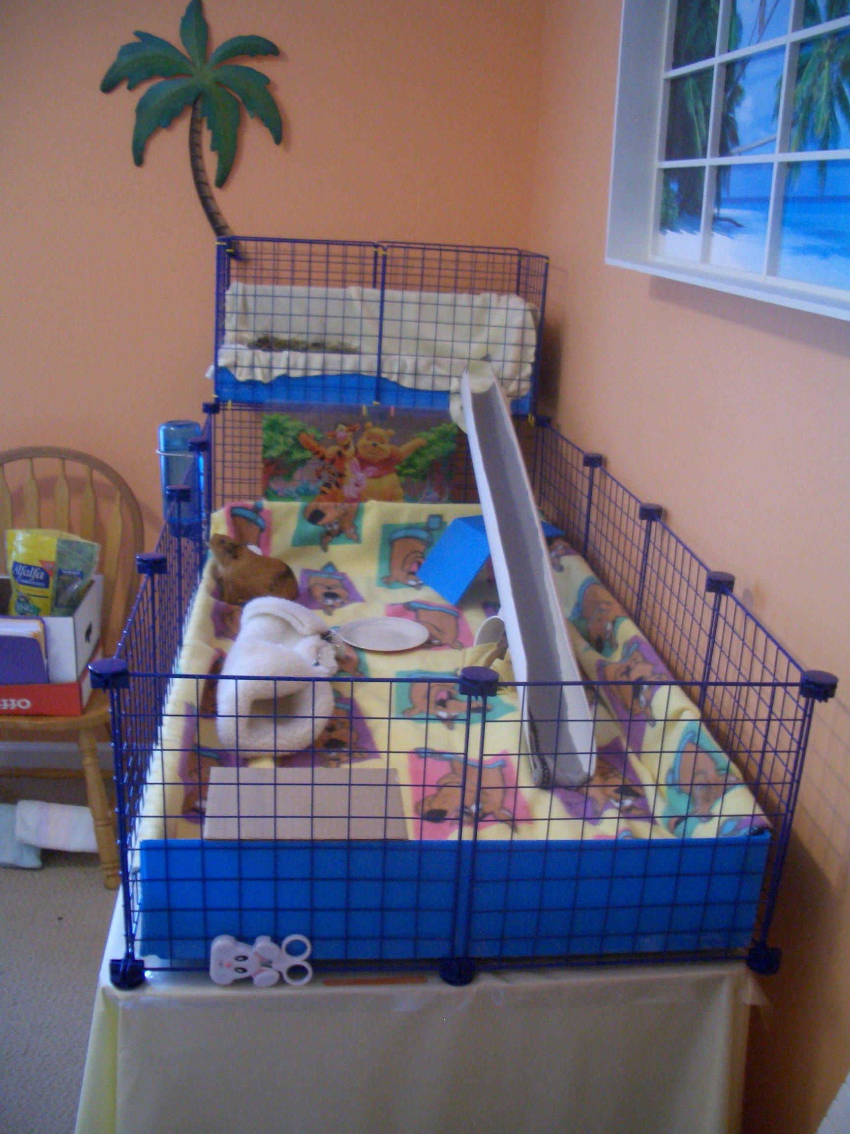 Photo album deb 39 s guinea piggies for Making a c c cage